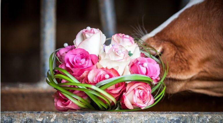 Heiraten auf dem Bauernhof